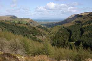 Glenariff forest park in the Glens of Antrim.