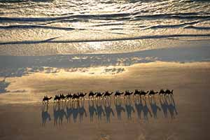 Camels on Broome's Cable Beach as seen from the Kimberley Aerial Highway_photo by James Morgan
