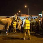 Horses arrive from Stansted Airport