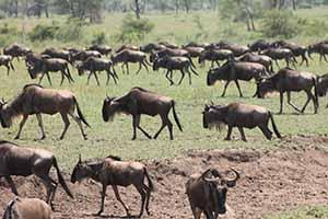 Serengeti_7183
