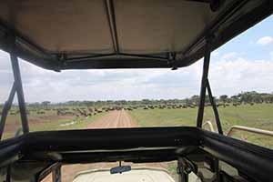 Serengeti_7194