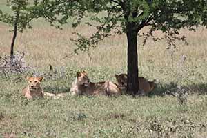 Serengeti_7206