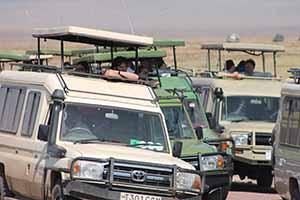 Serengeti_7756