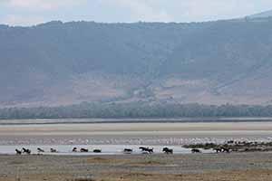 Serengeti_7790