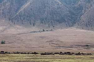 Serengeti_7791