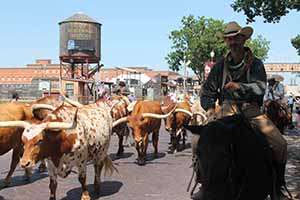Stockyard parade_9682
