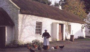 Ulster folk park chicks