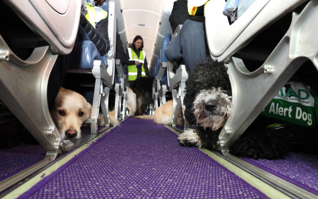 And dogs will fly as puppies take to the air with Flybe