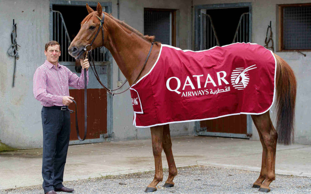 Qatar Airways back in the ring again with latest Irish horse industry sponsorship